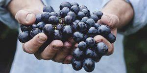 خواص و مضرات انگور