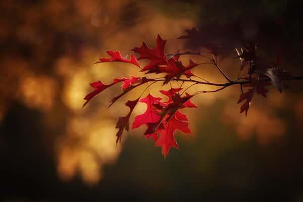 متن پاییزی زیبا و عاشقانه , جملات عاشقانه و زیبا , بهترین جملات عاشقانه