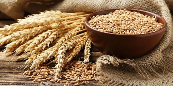 خواص و مضرات گندم , عوارض و زیان های گندم , فواید و خاصیت های گندم , o hw knl