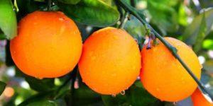 خواص و مضرات نارنج
