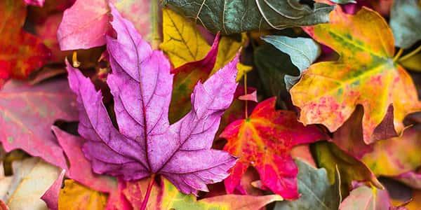 متن پاییز , تکست و جملات فصل پاییز , دلنوشته و اشعار پاییزی , شعر خزان و پاییز عاشقانه
